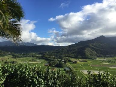 Taro fields of the North Shore